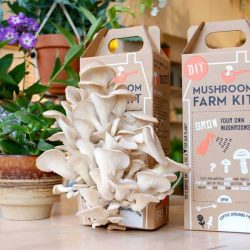 DIY Mushroom Farm Kit Beleven