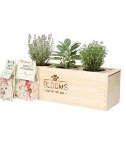 Blooms out of the Box – Italiaanse kruiden (vanaf 10 stuks) Beleven