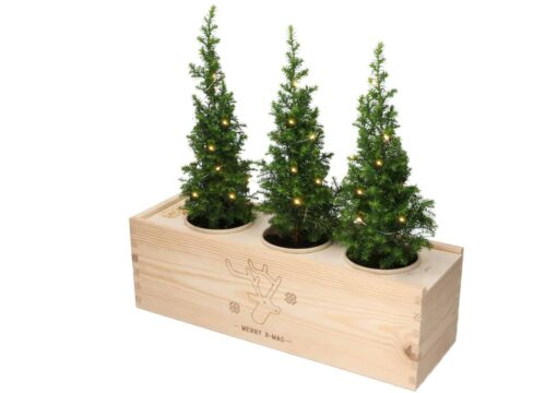 Blooms out of the Box – kerstboompjes Geven