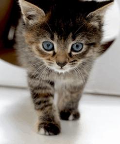 Kartonnen CatTent – de Tent voor Katten Cadeaupakketten
